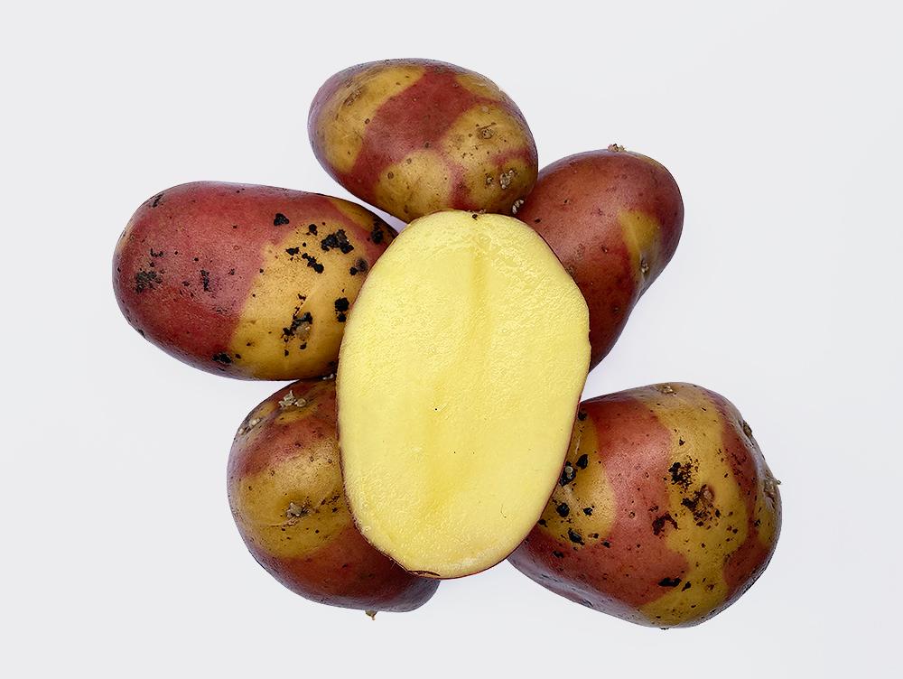 Kaum zu glauben: Es gibt eine gelb-rot gepunktete Kartoffel. Ihr Name ist Nemo. Ihre Fleischfarbe ist hellgelb.